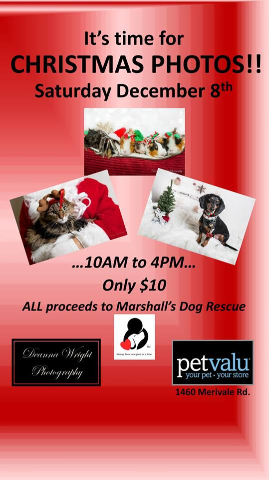 Christmas Photos at Pet Valu – Merivale Road | Marshall's Dog Rescue